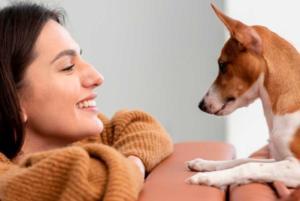 mascotas y el coronavirus